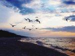 Mewy nad Bałtykiem